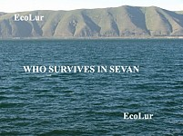 Who Will Survive in Sevan