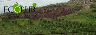 Garbage Landfill in Ashtarak and Orchards– Incompatible