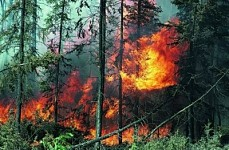 Executive Approved Forest Fire Fighting Program