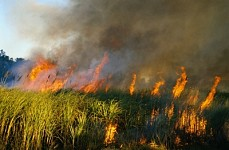 Fires in Grass-Covered Territories in Yerevan