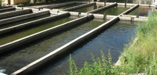 Water Usage Volume for Fish Farms Reduced by One Thirds