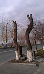 Yerevan Residents Unhappy with Tree Pruning