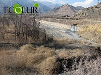 Mass Drying of Trees Observed in Meghri Area