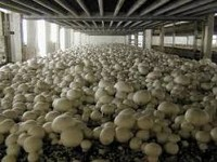 "Healthy Mushroom"" LLC Violated Environmental Legislation"