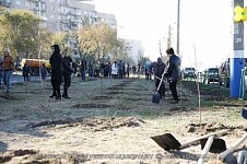 60 000 Trees and Shrubs Planted in Yerevan in 2014