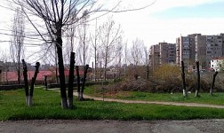 "Worried Yerevan Resident: ""What Pesticides Are You Mentioning:Trees Just Started Blossoming"" (Photos)"