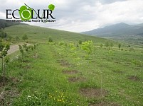 ArmForest Provided Around 17000 Trees for Spring Tree Planting