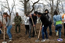 Around 4000 Plants Planted in Dilijan National Park