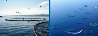 Number of Cage Nets Designed for Artificial Trout Breeding in Lake Sevan Increased Twice