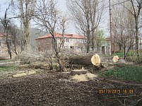 SOS Signal from Jermuk - Trees Felled Down in Downtown (Photos)