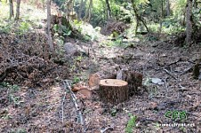 Alarm Signal: Illegal Tree Felling in Shikahogh State Reserve