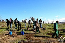 20000 Trees and Shrubs to Be Planted in Yerevan During Autumn Tree Planting