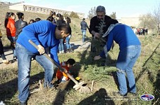 About 120 Himalayan Cedars Planted in Koghb Village