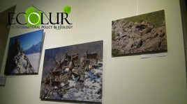 "Exhibition Held in Yerevan Entitled ""Climate Change and Dangers It Caused for Biodiversity"" (Photos)"
