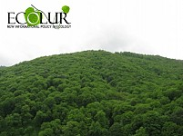 Carbon Reserves Accumulated in Forests of Armenia During 20 Years Reduced By 4 Million Tons