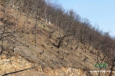 What's Happening in Shnogh Forests?