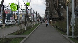 Yerevan Municipality Warning: Mainly Elms Subject to Deep Pruning