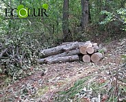 In 2015 495 trees Illegally Cut Down in Lori and Syunik