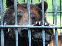 Hazardous Phenomenon for Our Times to Lock Wildlife Animals in Cages
