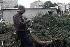 lllegal Tree Felling in Vanadzor: MP Reported on Crime