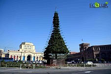 6000 Pine Tree Branches Provided for Main Christmas Tree in Yerevan (Photos)
