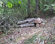 Eight Trees Illegally Cut Down in Dilijan National Park