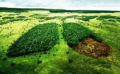 Norway Still Only Country To Declare Zero Level of State Procurement on Rainforest Felling