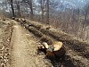 Nature Protection Ministry Explaining: Trees Felled Down in Dilijan National Park