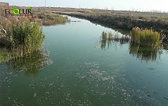 Water Quality of Sevjur River Supplying Water to Nuclear Power Plant Deteriorated