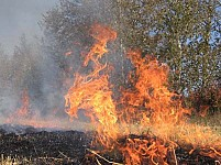5000 Sq. M. Grass-Covered Area Burnt Down in Guharq Forestry Enterprise