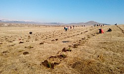 'ATP' Planted  64,107 Trees in Tashir and Stepanavan