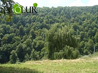 Dilijan National Park Offering Ecotourism Services