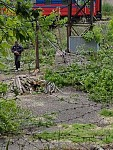 Tree Felling on Threshold of Summer in Yerevan (Photos)