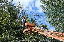 Sanitary Pruning of Trees Launched in Yerevan