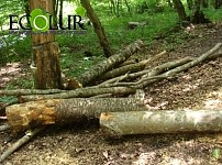 Forestry Head Arrested for Illegal Felling of 408 Trees