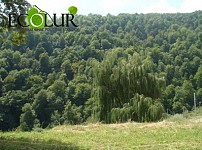 Armenian-Belarus Cooperation Envisages Forest Construction Works on Up To 50,000