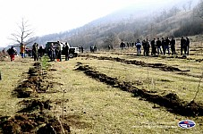 One Month of Pan-Armenian Tree Planting Launched