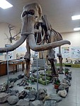 The Wealth of Geological Museum; From Perrywinkles to Three-Meter-Long Elephant