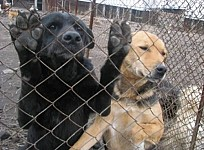 How To Solve Problem with Stray Dogs: Dingo Team Made a Proposal to Armenian Government