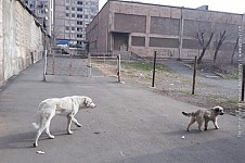 Stray Dogs Won't Be Business Any More: Municipality Establishing Its Center for Animal Neutralizaton