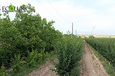8000 Ha of Land Area in Armenia To Proceed To Drip Irrigation by 2023