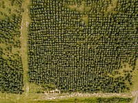 Sustainable Forest Management: Hrant Dink Memorial Forest Will Be Thinned In Order To Ensure the Health of the Site