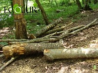 Assignments of RA Chief Prosecutor to Regional and Yerevan Prosecutor Offices on Verdict on Public Environmental Front on Forests Case