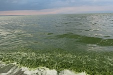 Society Concerned with Blooming in Lake Sevan Raised Proposals Aimed at Saving the Lake