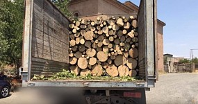 Tavush Policemen Detected Lorries Loaded with Illegal Timber and Workshop
