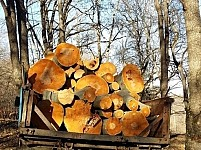 Another Tree Felling Case Detected in Tavush