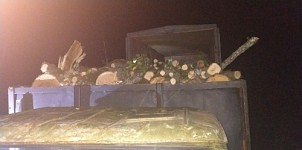 Illegal Transportation of Timber in Area of Syunik Forestry Enterprise