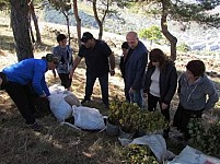 3000 Trees Planted in Khndzorut Forestry Enterprise in Lori Region