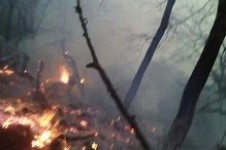 Around 1 Ha of Vegetation Cover and Trees on Fire in Ijevan Forestry Enterprise