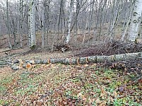 Whether Tree Felling Sought To Be Smothered?